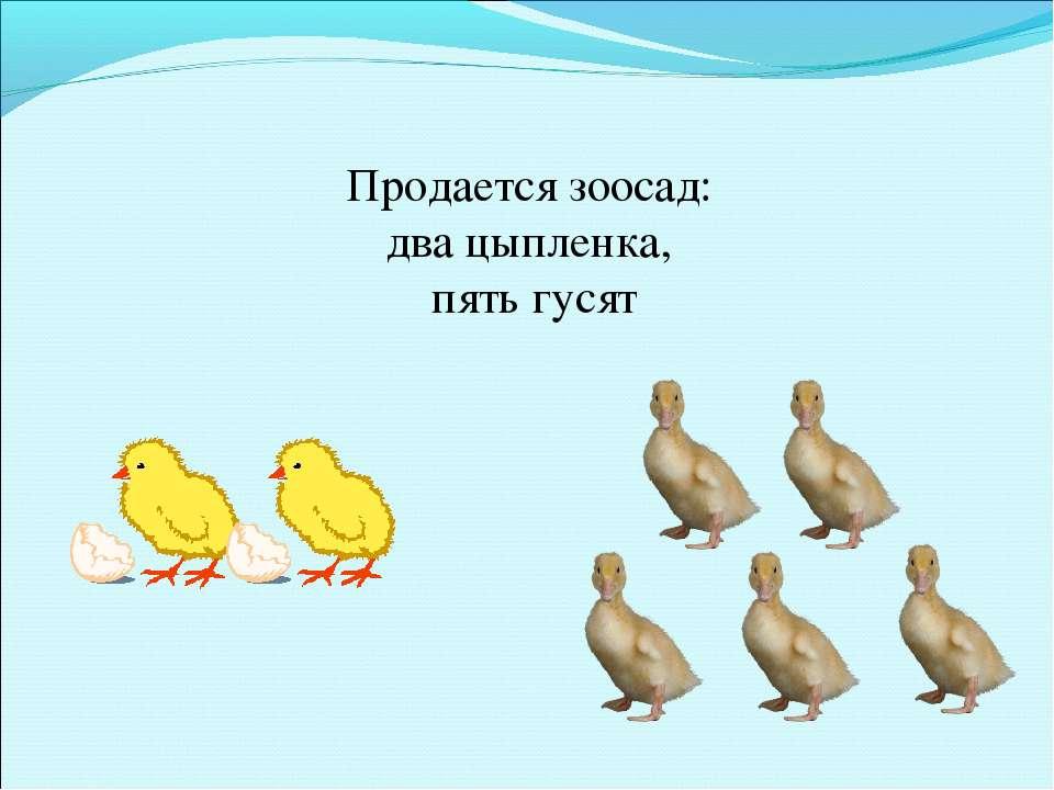 Продается зоосад: два цыпленка, пять гусят