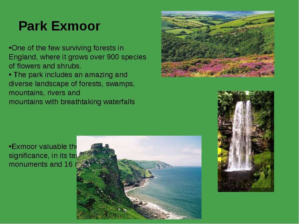 Park Exmoor  One of the few surviving forests in England, where it grows over...