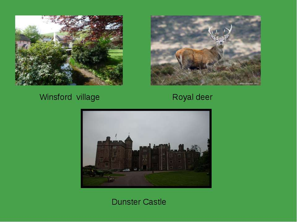 Winsford village Dunster Castle  Royal deer