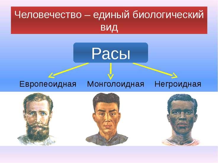 Человечество – единый биологический вид Европеоидная Монголоидная Негроидная ...