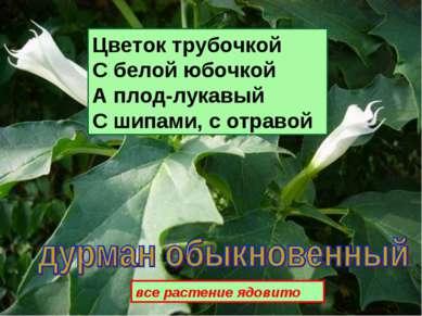 Цветок трубочкой С белой юбочкой А плод-лукавый С шипами, с отравой все расте...