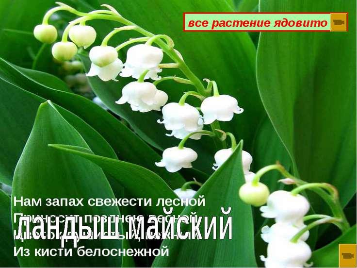 Нам запах свежести лесной Приносит позднею весной Цветок душистый, нежный Из ...