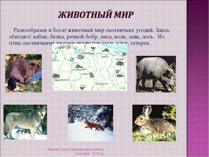 Разнообразен и богат животный мир охотничьих угодий. Здесь обитают: кабан, бе...
