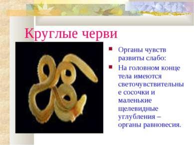 Круглые черви Органы чувств развиты слабо: На головном конце тела имеются све...
