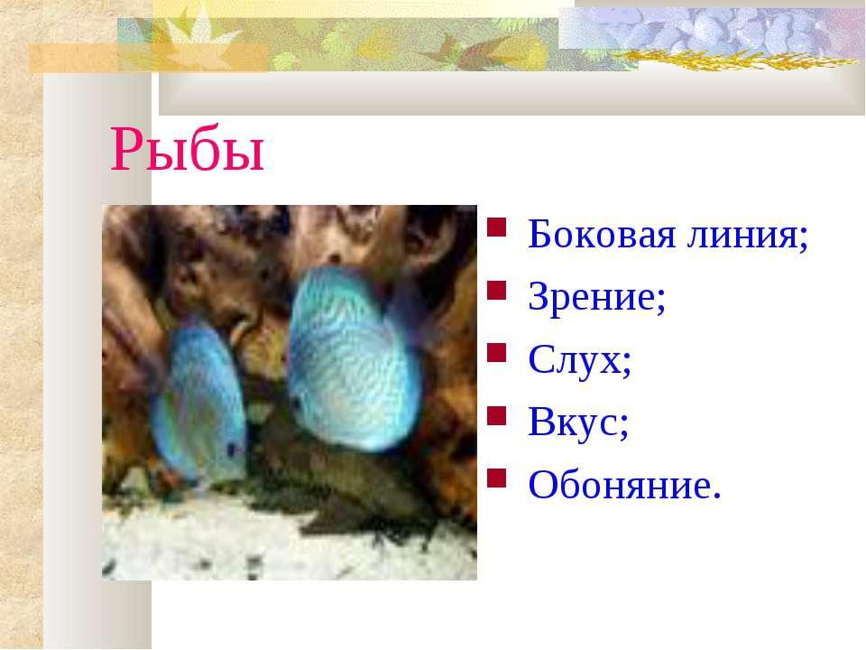 Рыбы Боковая линия; Зрение; Слух; Вкус; Обоняние.