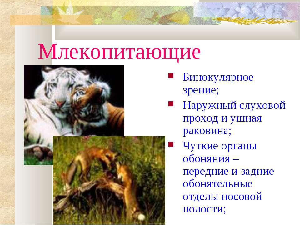 Млекопитающие Бинокулярное зрение; Наружный слуховой проход и ушная раковина;...
