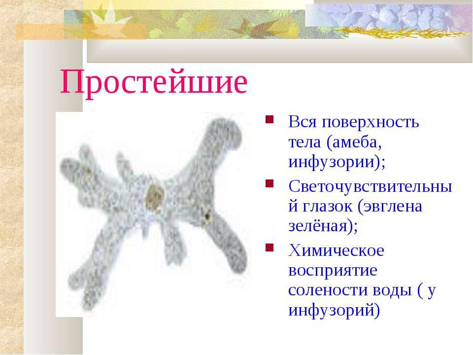 Простейшие Вся поверхность тела (амеба, инфузории); Светочувствительный глазо...