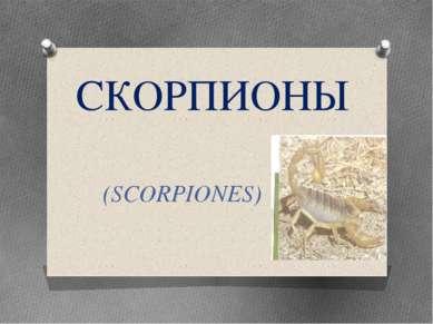 СКОРПИОНЫ (SCORPIONES)