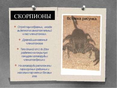 СКОРПИОНЫ Отряд паукообразных, иногда выделяют в самостоятельный класс членис...