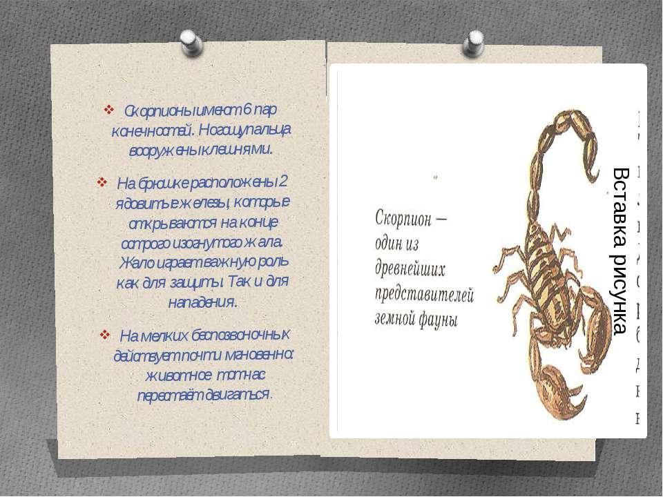 Скорпионы имеют 6 пар конечностей. Ногощупальца вооружены клешнями. На брюшке...