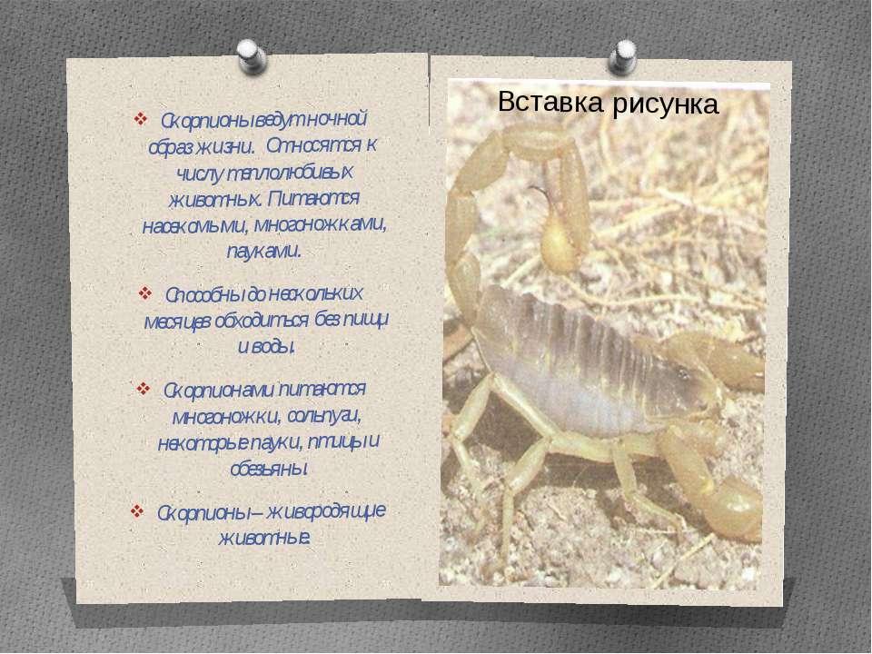 Скорпионы ведут ночной образ жизни. Относятся к числу теплолюбивых животных. ...