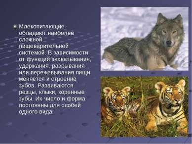 Млекопитающие обладают наиболее сложной пищеварительной системой. В зависимос...