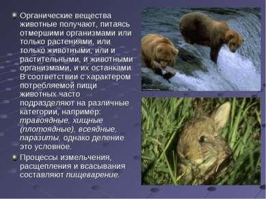 Органические вещества животные получают, питаясь отмершими организмами или то...
