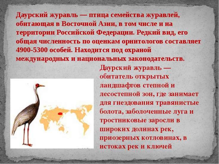 Даурский журавль — птица семейства журавлей, обитающая в Восточной Азии, в то...
