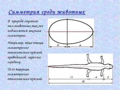 Симметрия среди животных В природе строение тел животных так же подчиняется з...