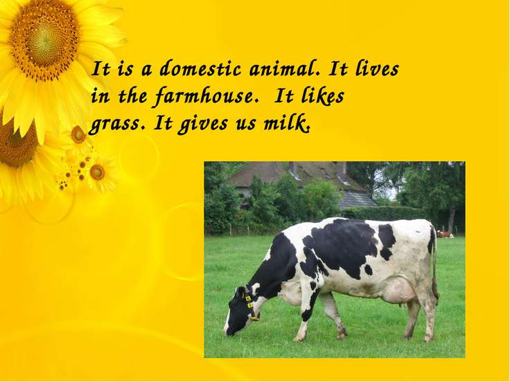 It is a domestic animal. It lives in the farmhouse. It likes grass. It gives ...