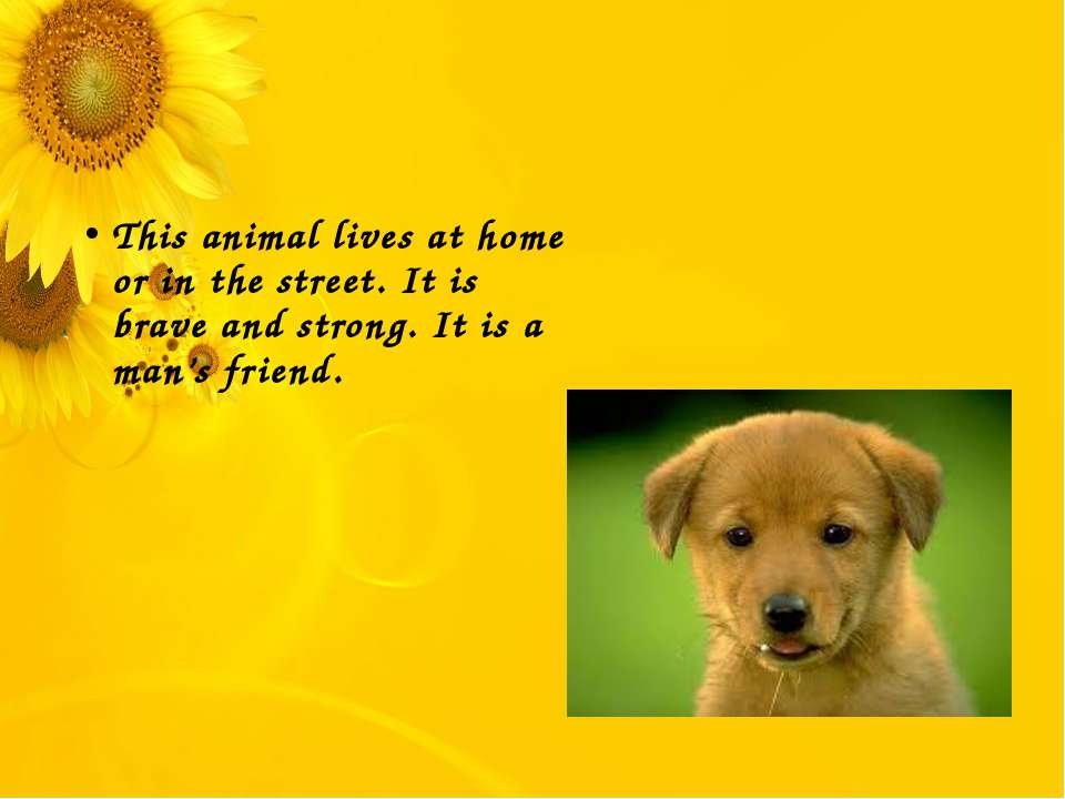 This animal lives at home or in the street. It is brave and strong. It is a m...