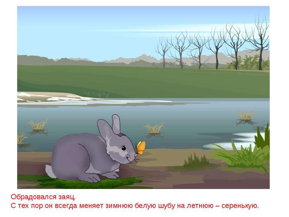 Обрадовался заяц. С тех пор он всегда меняет зимнюю белую шубу на летнюю – се...