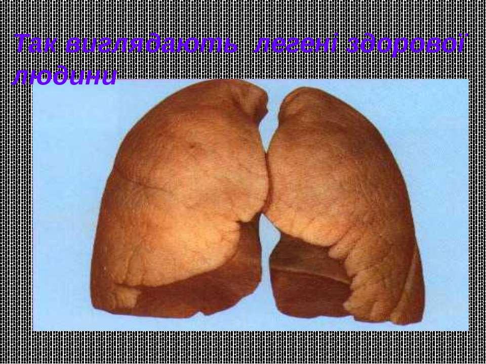 Так виглядають легені здорової людини
