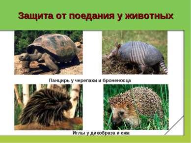 Защита от поедания у животных Панцирь у черепахи и броненосца Иглы у дикобраз...