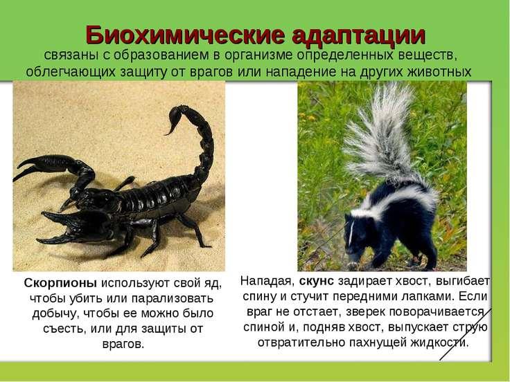 Биохимические адаптации связаны с образованием в организме определенных вещес...