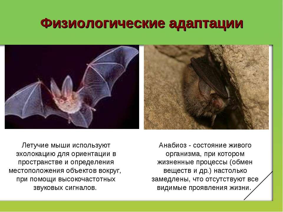 Физиологические адаптации Летучие мыши используют эхолокацию для ориентации в...