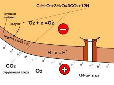 НАД*Н2 = НАД + 2Н СО2 О2 + + + + + + + + + + + + Н Н Н Н Н Н Н Н Н Н Н Н Н + ...