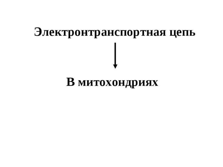 Электронтранспортная цепь В митохондриях