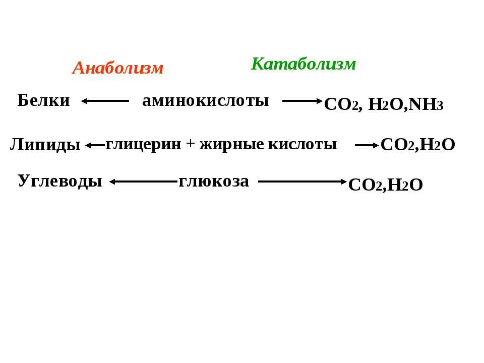аминокислоты глицерин + жирные кислоты глюкоза Белки Липиды Углеводы СО2, Н2О...