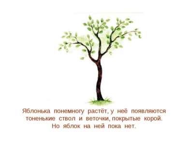 Яблонька понемногу растёт, у неё появляются тоненькие ствол и веточки, покрыт...