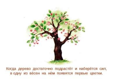 Когда дерево достаточно подрастёт и наберётся сил, в одну из вёсен на нём поя...