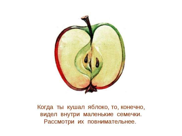 Когда ты кушал яблоко, то, конечно, видел внутри маленькие семечки. Рассмотри...