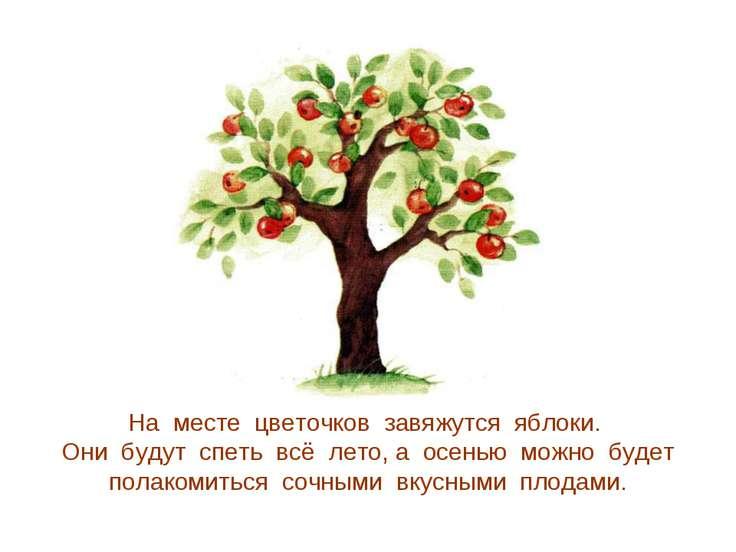На месте цветочков завяжутся яблоки. Они будут спеть всё лето, а осенью можно...
