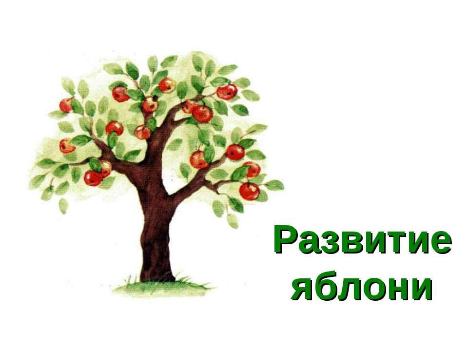 Развитие яблони