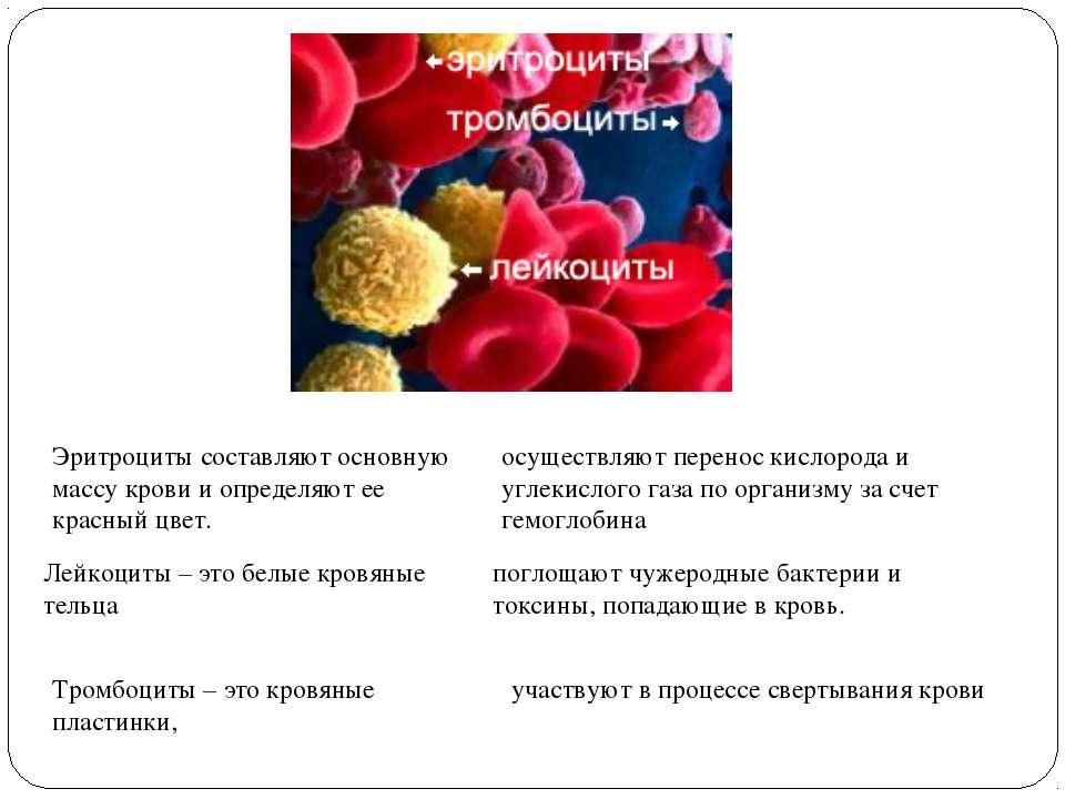 Эритроциты составляют основную массу крови и определяют ее красный цвет. Лейк...