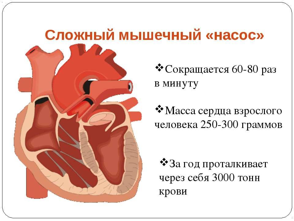 Сложный мышечный «насос» Сокращается 60-80 раз в минуту За год проталкивает ч...