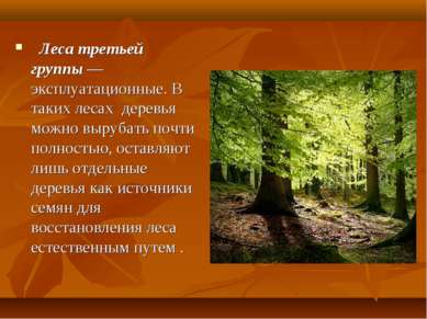 Леса третьей группы — эксплуатационные. В таких лесах деревья можно вырубат...