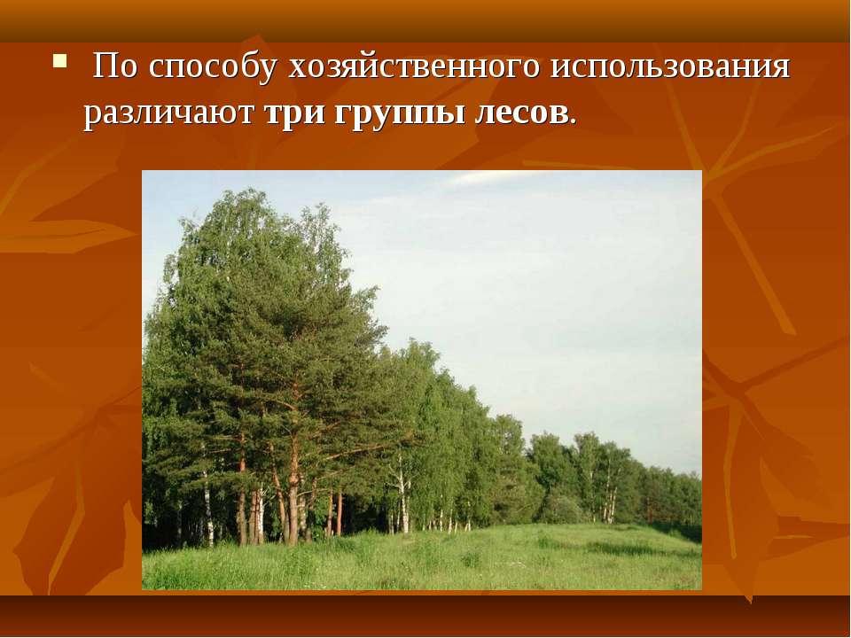 По способу хозяйственного использования различают три группы лесов.