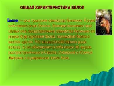 ОБЩАЯ ХАРАКТЕРИСТИКА БЕЛОК Белки — род грызунов семейства беличьих. Кроме соб...