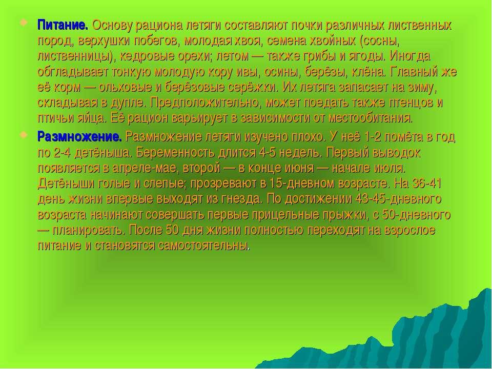 Питание. Основу рациона летяги составляют почки различных лиственных пород, в...