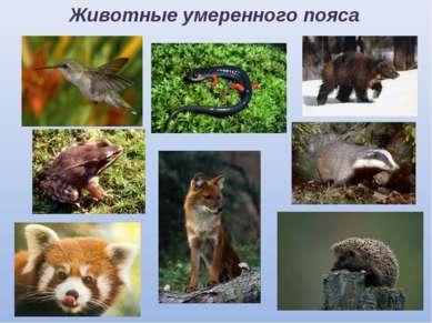 Животные умеренного пояса