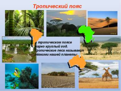 Тропический пояс В тропическом поясе жарко круглый год. Тропические леса назы...
