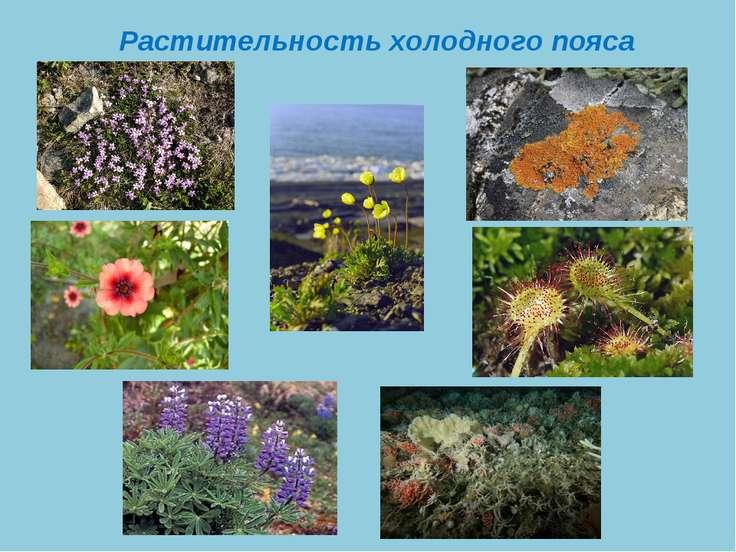 Растительность холодного пояса