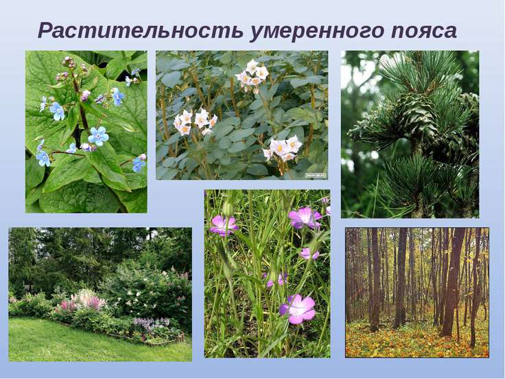 Растительность умеренного пояса