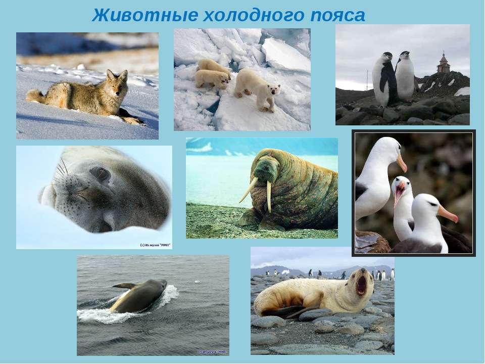 Животные холодного пояса