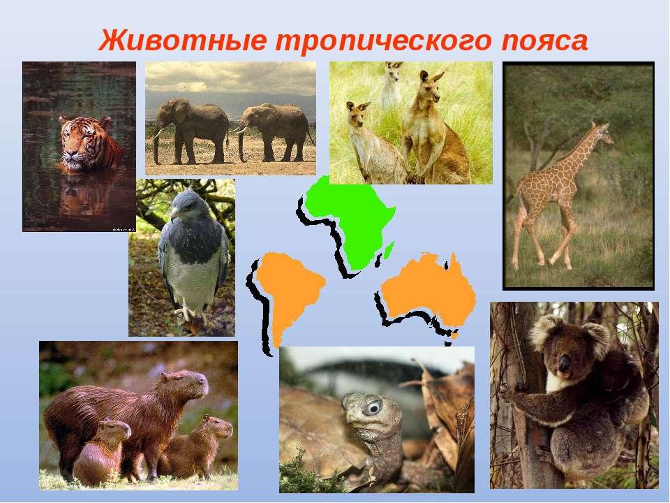 Животные тропического пояса