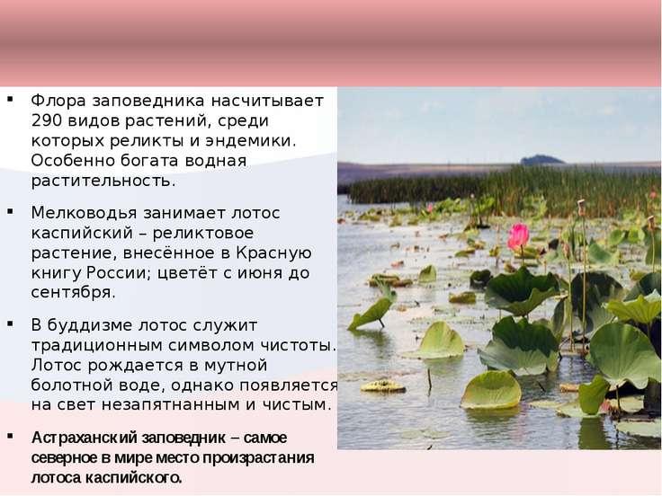Флора заповедника насчитывает 290 видов растений, среди которых реликты и энд...