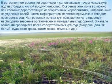 В естественном состоянии солончаки и солончаковые почвы используют под пастби...