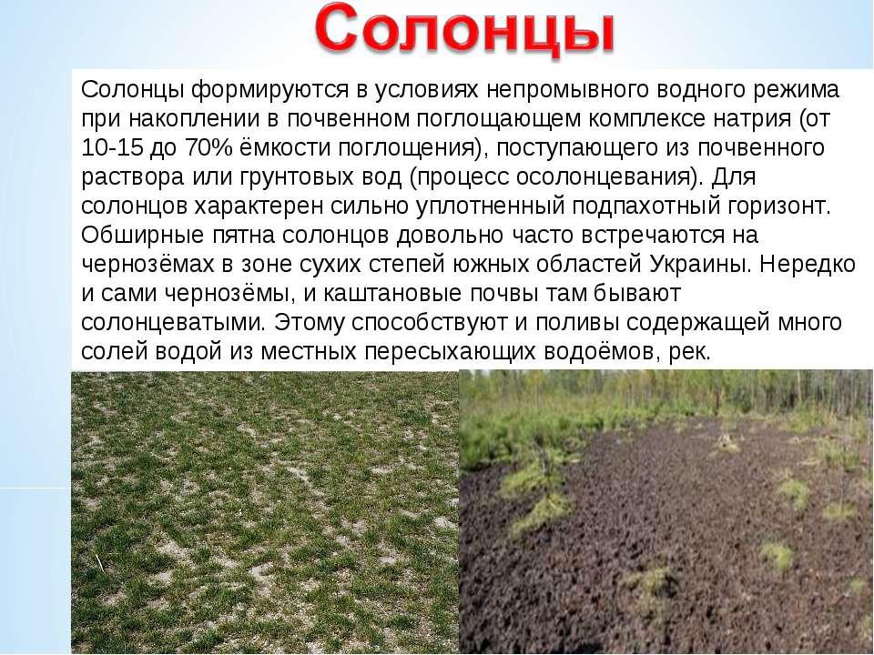Солонцы формируются в условиях непромывного водного режима при накоплении в п...