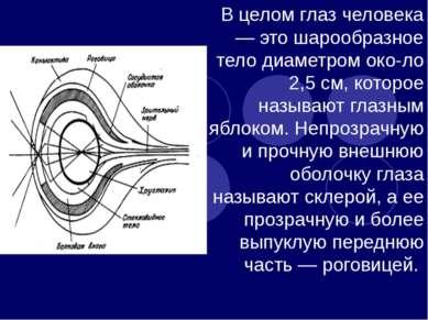 В целом глаз человека — это шарообразное тело диаметром око ло 2,5 см, которо...